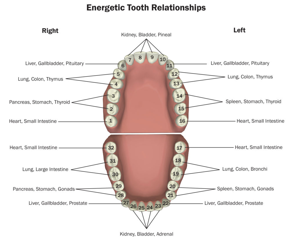 Teeth 101 healthy teeth and gums indicate a healthy body life for an even more detailed list of each tooth you can use an interactive tooth chart found here either select click on the tooth in question from the ccuart Choice Image